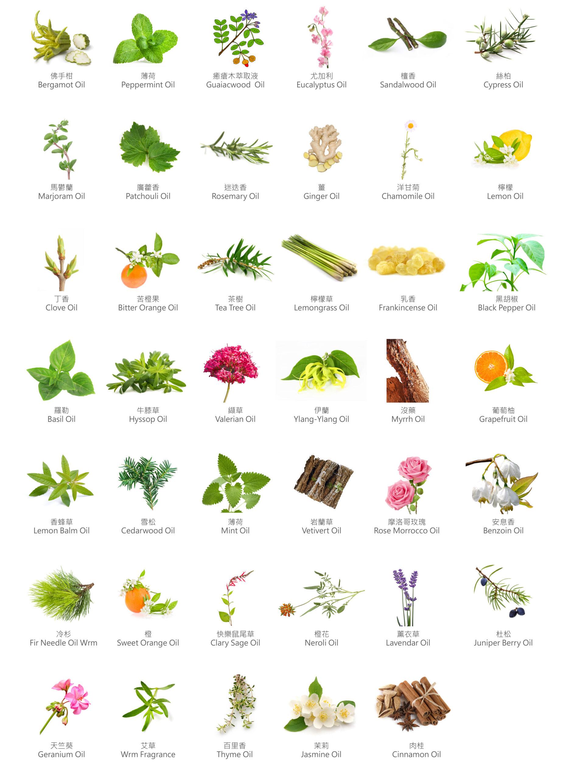 印度植物精油