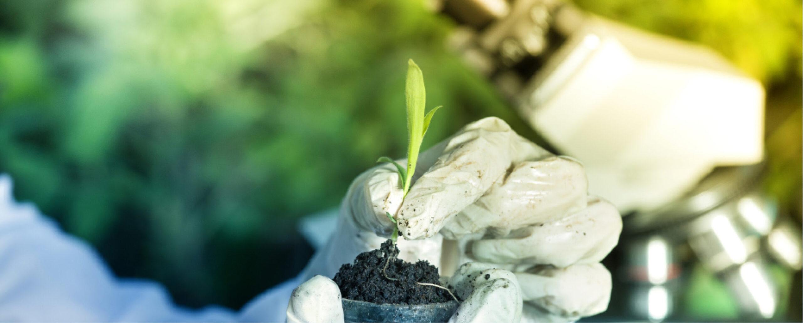 天然植物精油萃取來源